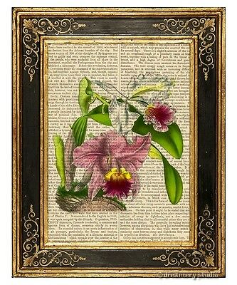Ruby Lipped Cattleya Orchid Art Print on Vintage Book Page Botanical Home Decor Orchid Botanical Prints