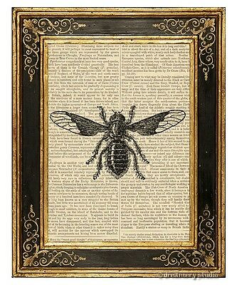 - Bee Fly Art Print on Vintage Book Page Garden Farm Home Decor Wall Hanging Gifts