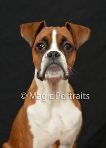 PET PHOTOS AND CONTEST