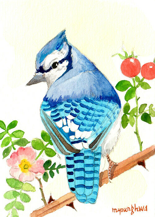 ACEO ORIGINAL In Watercolor, Blue Jay With Wild Rose, Gift For Bird Lovers - $10.99