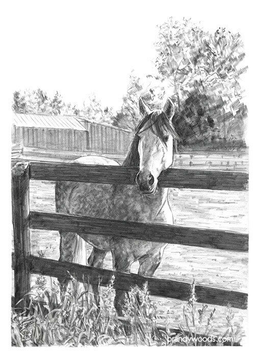 Horse Lover Ranch Pencil Drawing Sketch Art Artwork Cavalia PRINT - Brandy Woods