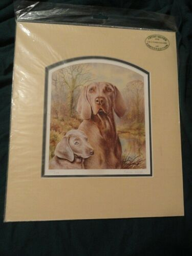 Matted Limited Edition Art Print Weimaraner by UK Artist Kevin Wood #11*