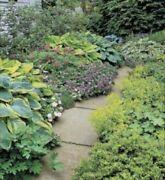 Garden Maintenance Glenview Caloundra Area Preview