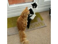 Purrfect Pawz Pet Care provides affordable and experienced pet care in your home.