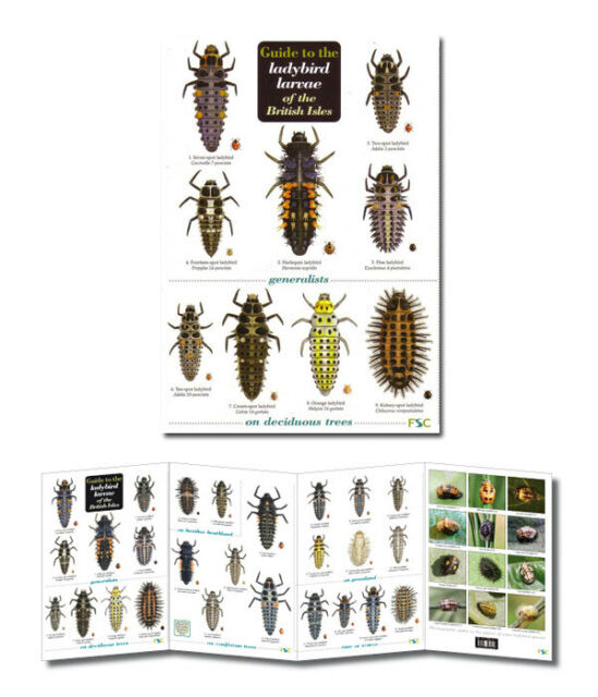 Guide to Ladybird Larvae of the British Isles Identification Chart Poster NEW