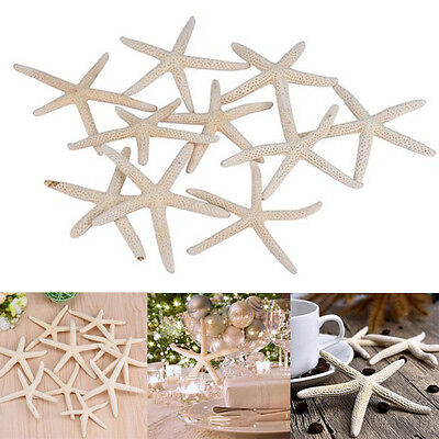 10 Pieces White Natural Finger Sea Star Wedding Decor Party Festival Home (Star White Natural)