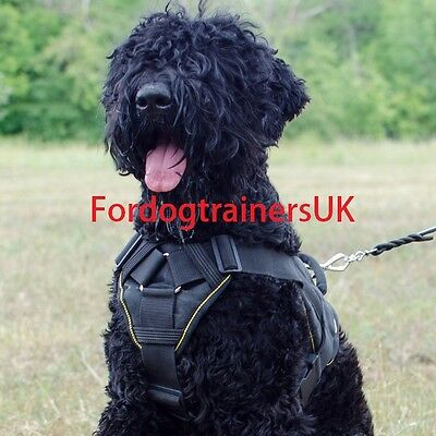 Black Russian Terrier Harness UK Best Choice | Large New Nylon Dog Harness  BRT