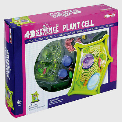 PLANT CELL  #26701 ~Detailed 4D Science MODEL BOX KIT ()