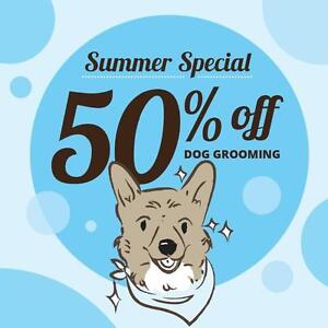 50% OFF Dog Grooming!