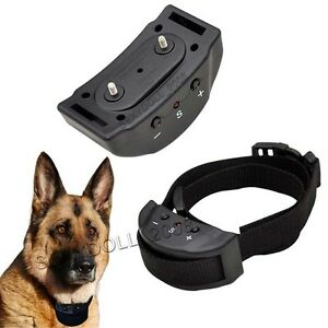 Dummy Dog Training Collar