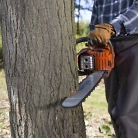 Black Spruce Tree Cutting &  Removal
