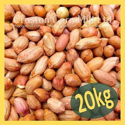 20kg *Premium Grade* Peanuts for Wild Birds -  Groundnut Kernels Bird Food Nuts