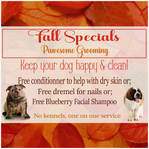 Fall Specials - One on One Grooming