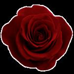 emily-rose-btq