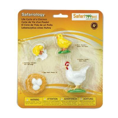 Life Cycle Of Chicken (Life Cycle Of A Chicken ~ educational figures models Safari Ltd)