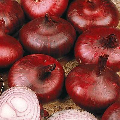 Onion Seeds - RED BRUNSWICK - Mild and Very Sweet Variety - 50 Seeds