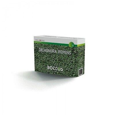 Semi tappeto erboso prato Dichondra Repens Bottos dicondra confezione da 1 Kg