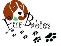 Fur babies dog walking services
