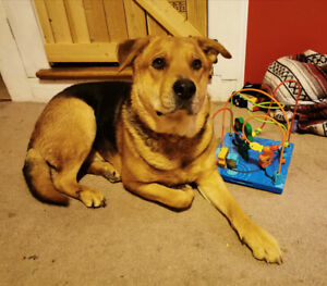 Wonderful dog looking for a new home