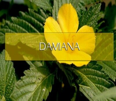 Damiana Capsules 100% Organic Dr Sebi All Natural Damiana Leaf Powder Damiana Leaves 100 Capsules