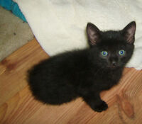 BEAUTIFUL KITTENS AVAIL @ PETS NEED LOVE 2 RESCUE IN VERNER