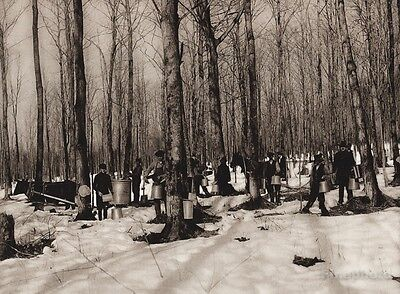 1925 Vintage Print CANADA ~ Quebec Maple Syrup Trees Food Kitchen Snow Photo Art for sale  Shipping to Canada