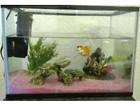 2 Cold Water Fish, 24 Litre Tank & All The Accessories