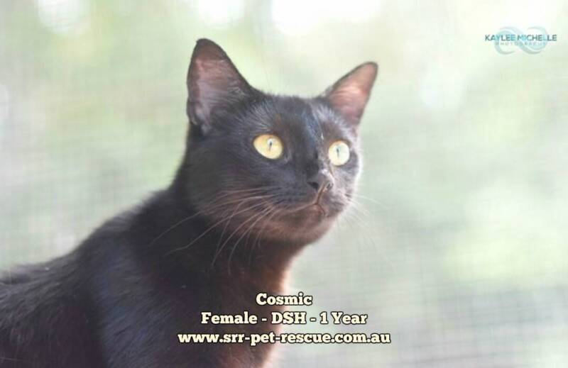 Cosmic - Soquilichi Rescue | Cats