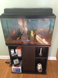 Fish & Accessory