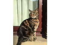 Tabby cat missing in Sheffield S7 area