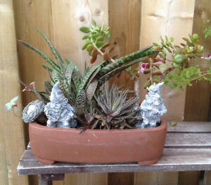 Tropical Plant - easy to grow succulent variety. Updated ad.