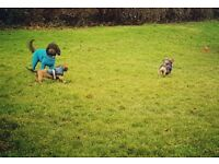Dog Walking and Pet Sitting services by The Fairy Dogmothers. SE22, SE21, SE24, SE1, SE8, SE10