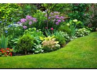 GARDEN PLANTS & SHRUBS (I WILL COLLECT)