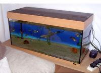 Full Aquarium Set Up Including Cabinet, Eheim External Filter, Eheim Air Pump & Lots Of Accessories.