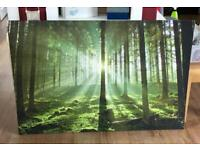 Beautiful Woodland Picture 120mm x 800mm