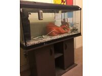 Fluval 160litre fish tank with light canopy and stand