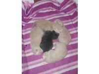 kittens I hand raise
