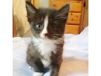 4 Happy beautiful kittens for sale