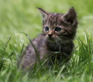 Looking for a kitten.