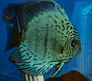 Fish tank cleaning service. (FREE QUOTES)