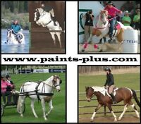 Equine Assisted Therapy and Riding program 5 mins SE of Edm