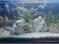 Malawi fish. Tank filter