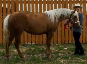 All breed all ages all disciplines horse training