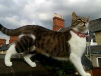 Lost cat called bella