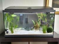 41L Aquarium with filter, heater and siphon