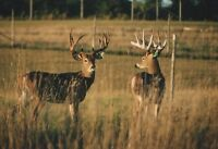 WHITETAIL DEER FARM TOURS FOR KIDS