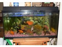 Cold water tank and 5 large fish