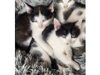 Super playful kittens