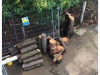 FIR TREE LOGS FOR SALE
