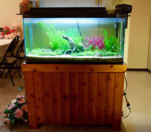 40/50 gallons aquarium tank with fishes ALL IN!!!